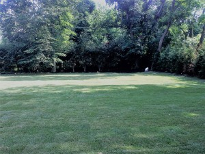 Beautiful lawn maintenance by Anthony's Lawn Care Plus