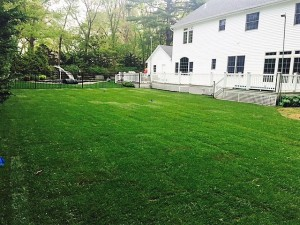 Residential landscaping by Anthony's Lawn Care Plus