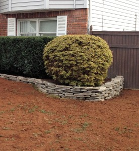 Commercial lawn care before pictures