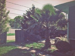 Palm trees in a backyard makeover