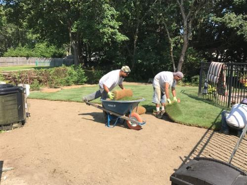 sod-during